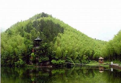 宜兴竹海图片