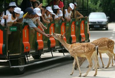 香江野生动物园门票团购