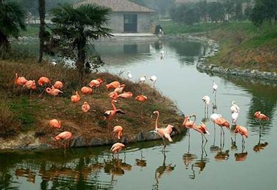 杭州野生动物园门票团购