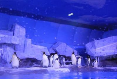 武汉极地海洋世界门票团购
