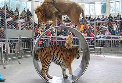 杭州动物园门票团购