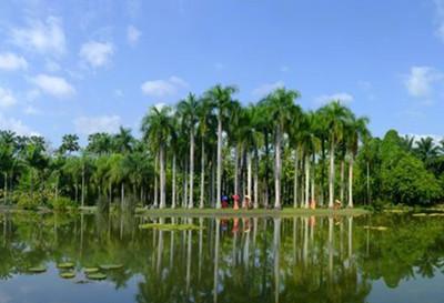 西双版纳植物园