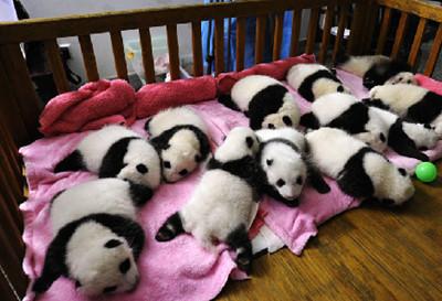 成都大熊猫基地门票团购