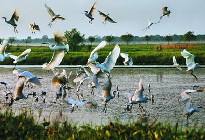 南沙湿地公园门票团购