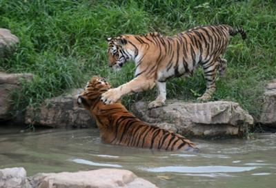 扬州动物园门票团购