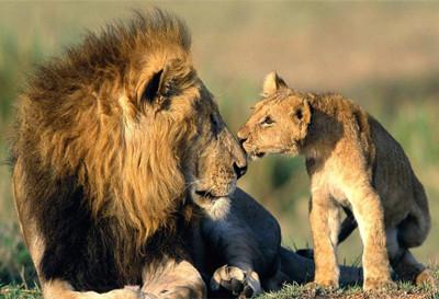 青岛森林野生动物世界门票团购