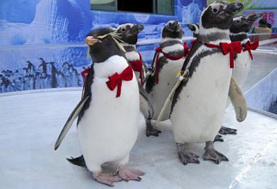 杭州极地海洋公园门票团购
