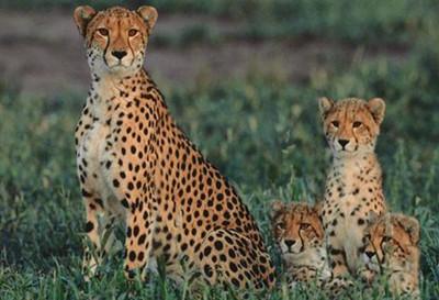 5折 秦岭野生动物园是西北首家野生动物园,位于秦岭北麓,终南之巅,园