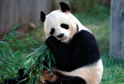 大兴野生动物园门票团购