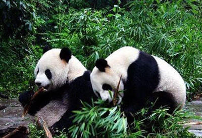 上海动物园门票团购