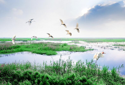 洪泽湖湿地公园