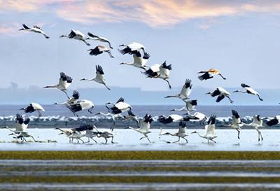 鄱阳湖湿地公园