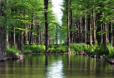 兴化水上森林公园门票团购图片