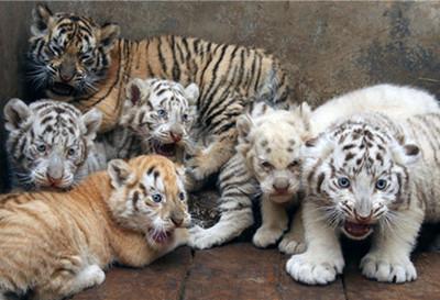 章丘野生动物园
