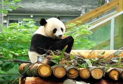 桂林动物园门票团购