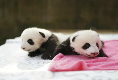 上海西郊动物园门票团购