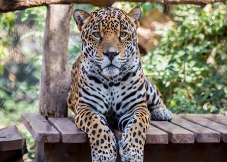南通野生动物园