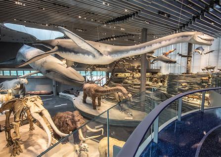 上海自然博物馆门票团购