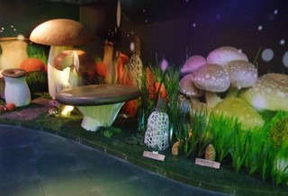 菇菌博物馆