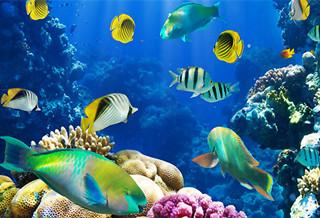 富��海底世界