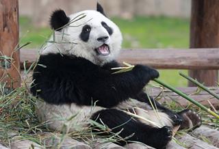 南汇野生动物园
