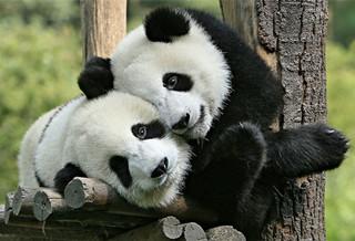 小珠山野生动物园