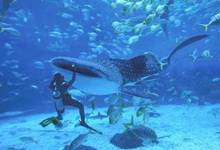 烟台鲸鲨馆