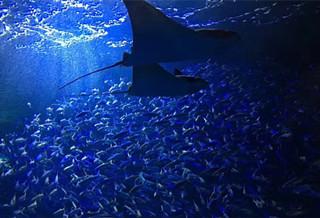 包头海洋世界