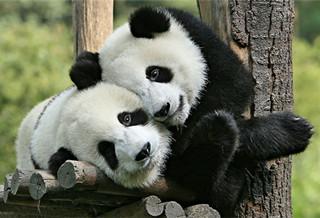 黄岛野生动物园