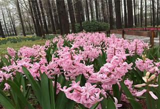 南京植物博览园
